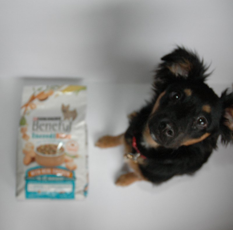 Should I Feed My Dog Before I Eat
